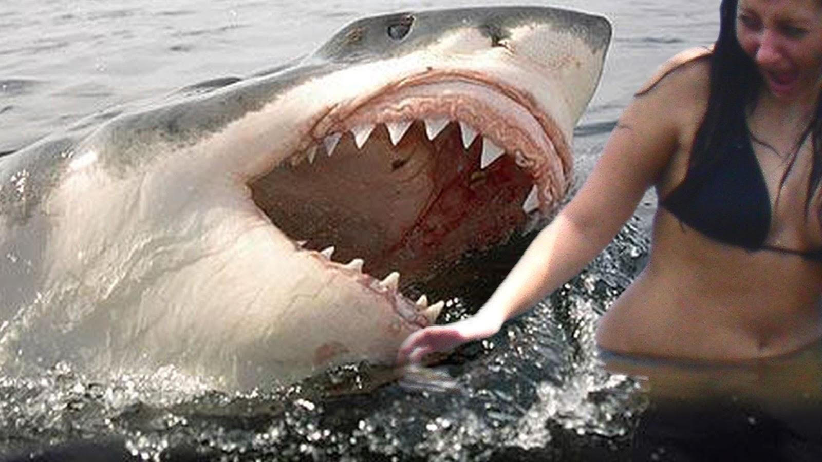 SHARK ATTACKSHARK VIDEOSRECENT SHARK ATTACKSLATEST SHARK ATTACK