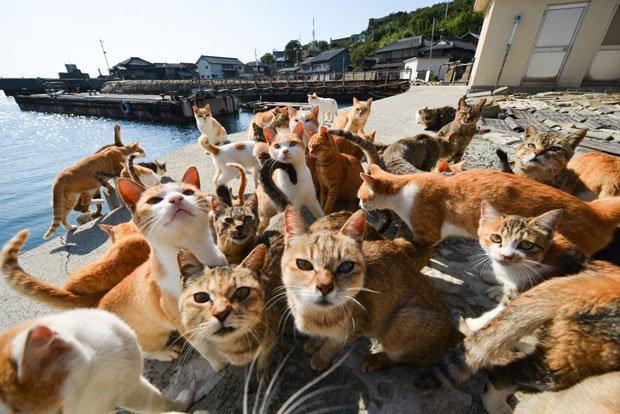 La isla de los gatos.