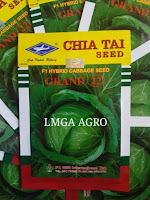 ciri-ciri kol, manfaat kubis, kubis, sayur kol, jual benih kubis, toko pertanian, toko online, lmga agro