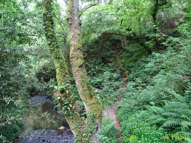 Senda del Escañorio tramo con vegetación junto al río