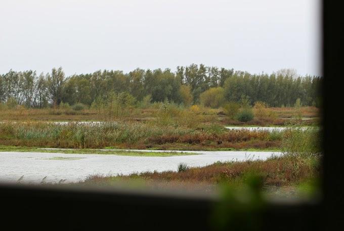 Op zoek naar zeearenden en beversporen op de Tongplaat in de Nieuwe Dordtse Biesbosch