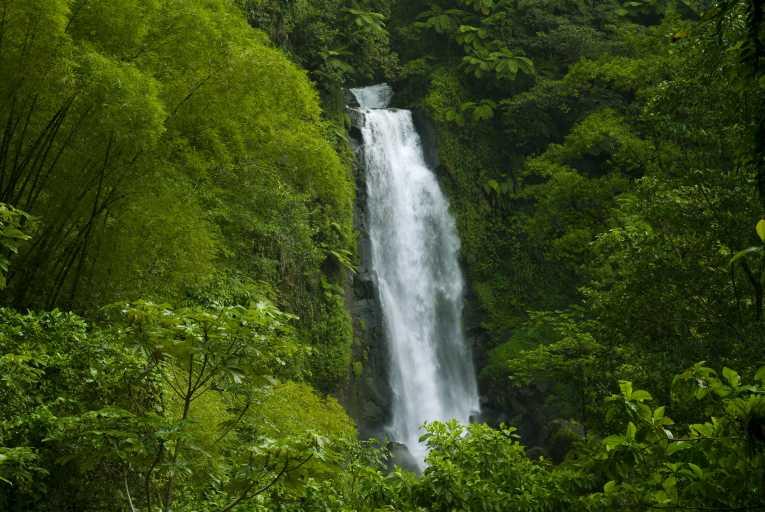 amazon rainforest south america - photo #13