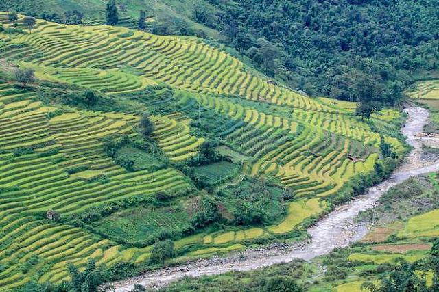 Ngắm cảnh sắc 'thiên đường' ruộng bậc thang hùng vĩ ở Y Tý Lào Cai 11