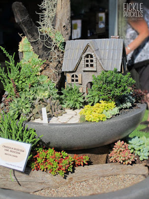 Succulent fountain miniature garden