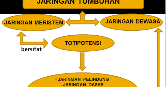 "Download Powerpoint Biologi ""Jaringan Tumbuhan"""