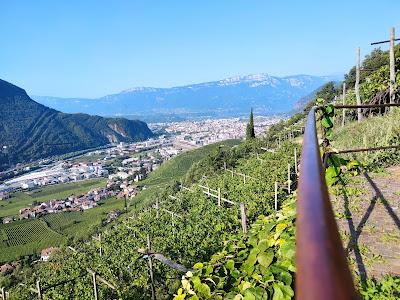 vigne bolzano