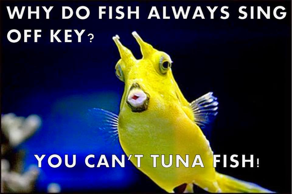 Funny Off Key Tuna Fish Joke Picture