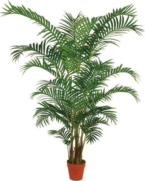 Decoraconmar a plantas de interior y otras - Planta interior palmera ...