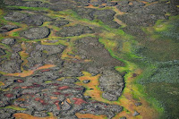 Permafrost peatland in the Arctic. (Credit: Tarmo Virtanen) Click to Enlarge.
