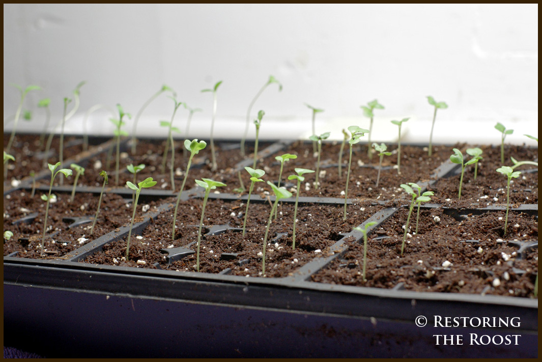 Restoring the Roost: Starting Seeds Indoors & a DIY Grow ...