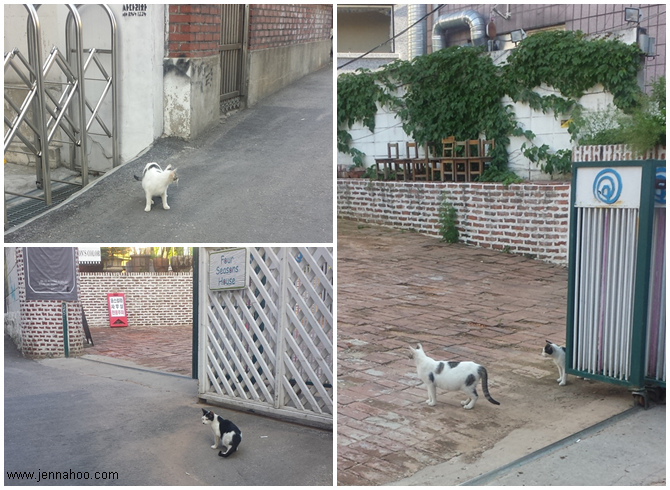 Stray cats in Hongdae