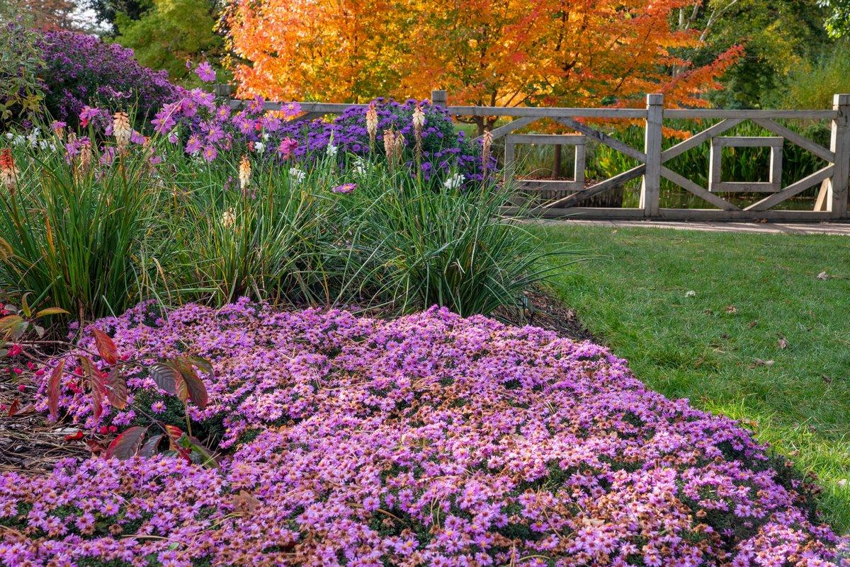 Flores tipo margarita de diferentes colores en otoño