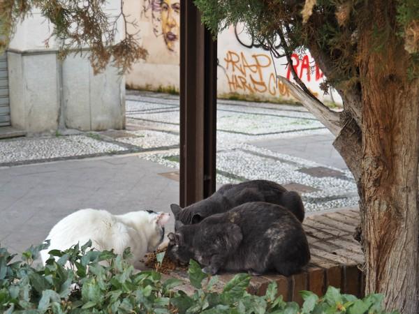 gatos granada