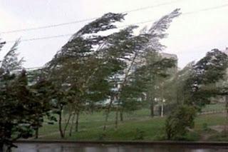9 октября местами в Свердловской области ожидается сильный ветер с порывами до 20 м/с.