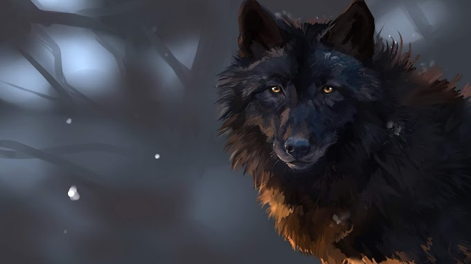 Papel de Parede Lobo Negro