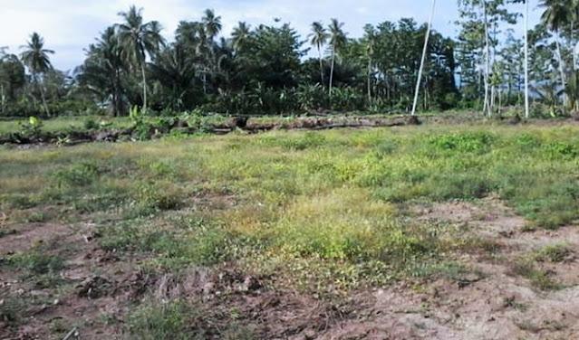 Kalau Tak Mau Dirampas Pemerintah, Buruan Dah Cangkulin Tuh Tanah Terlantar