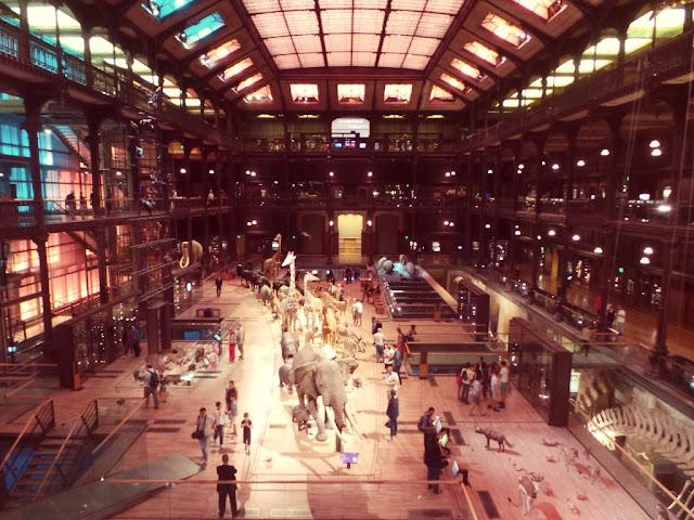 Galerie de l'évolution museum d'histoire naturelle paris musée animaux