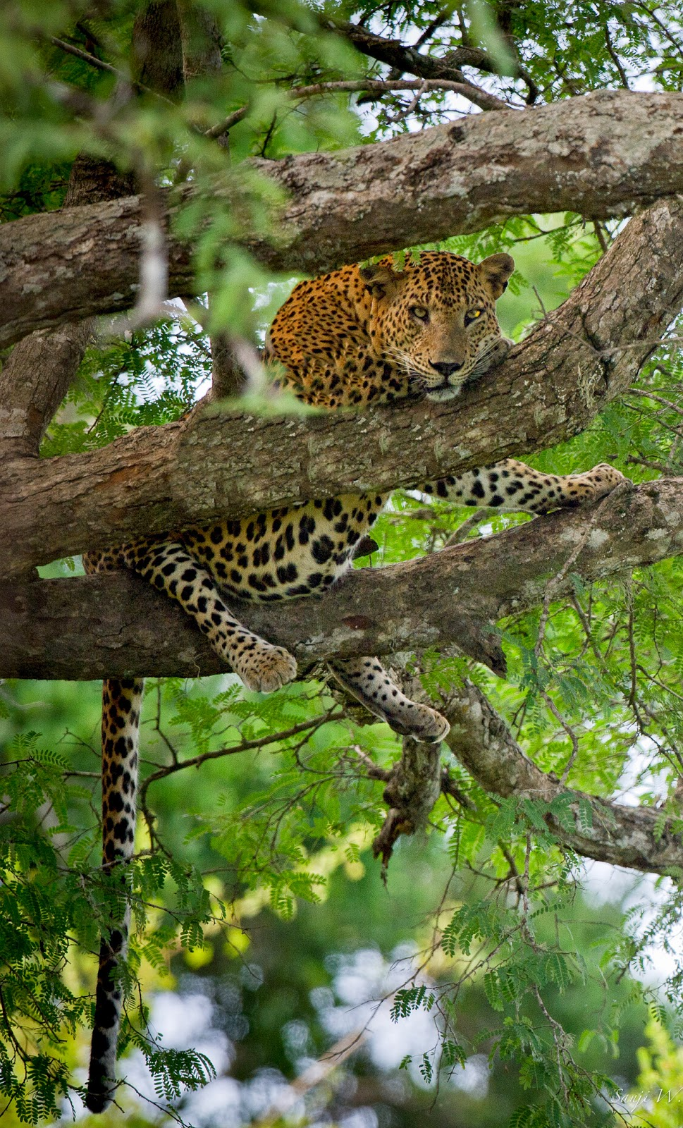 YALA NATIONAL PARK 10 Places Not to Miss in Srilanka
