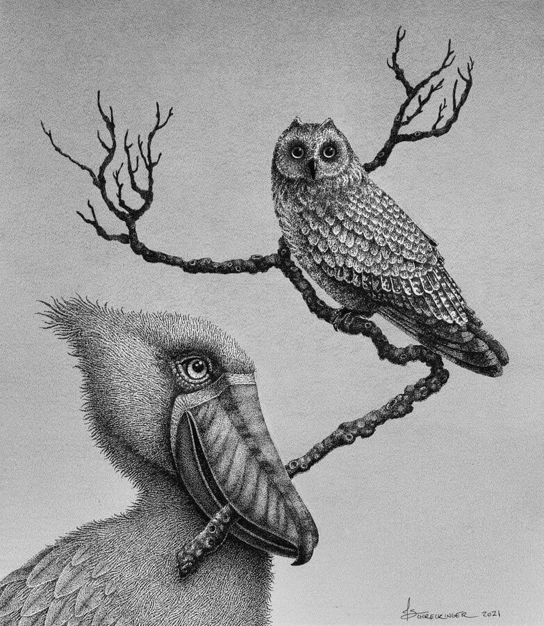 06-Short-Eared-Owl-and-the-stripy-beak-Juliet-Schreckinger-www-designstack-co
