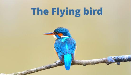 The little Flying Bird English kid story