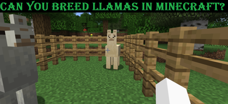 Can you Breed llamas in Minecraft