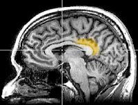 posterier cingulate cortex