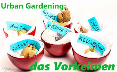 http://www.amor-und-kartoffelsack.de/2017/03/kartoffeln-auf-dem-balkon-leichtgemacht-Vorkeimen.html