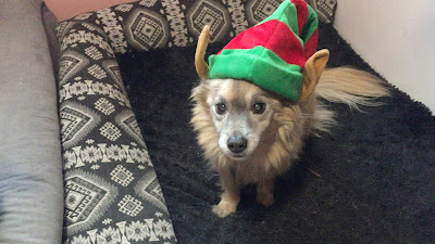 Small tan dog with a holiday elf hat