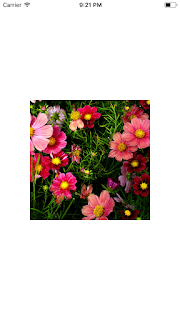 Flower image with blur effect