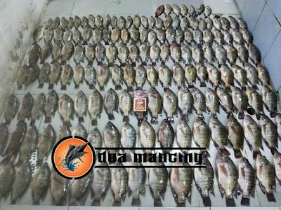 Mantra Jawa untuk Pemanggil ikan Agar berkumpul