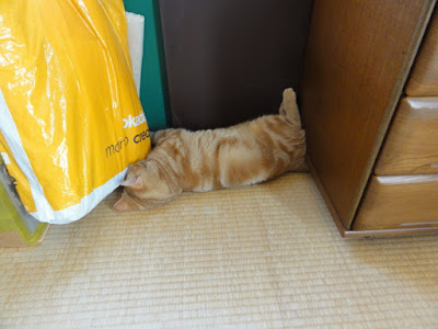 猫が家具と家具の間で寝ています。