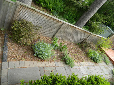 Humewood Toronto backyard garden makeover before  Paul Jung Gardening Services
