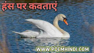 हंस पंक्षी पर कविता | Poem on Swan In Hindi