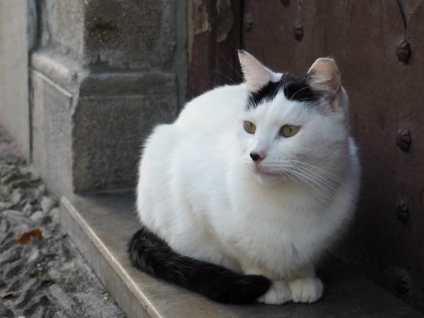 granada gatos adopcion