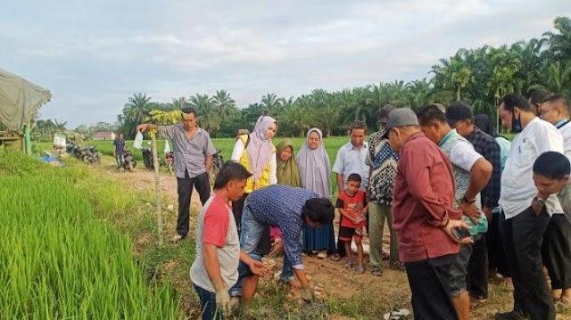 Aceh Tamiang Telah Siapkan 500 Hektare Pengembangan Padi Organik