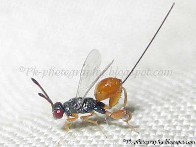 praying mantis and wasp parasitism relationship