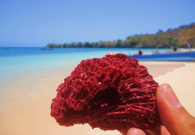 Pantai Pink Lombok (Pink Beach)