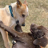 pup_socialize_with_dogs