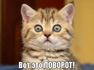 Удивлённый котёнок