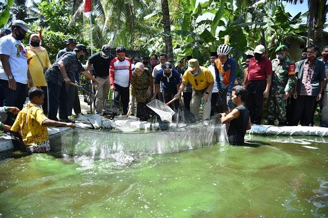 Bonorowo Bakal Dikembangan jadi Sentra Ikan Gurameh Kebumen