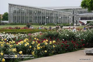 大温室を望む薔薇園の光景写真