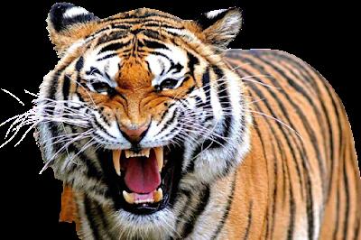 Pukul Berapa Tok Harimau Siang Dan Malam Hari