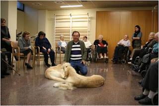 Sesión de Terapia Asistida con animales