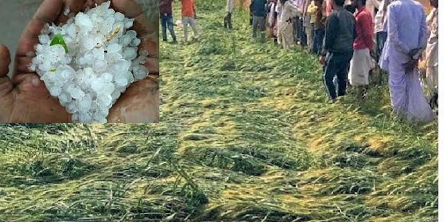 जबलपुर में ओलावृष्टि से फसल पूरी तरह से चौपट | JABALPUR NEWS