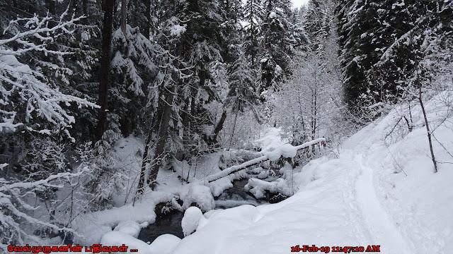 Tamanawas Falls Trail #650