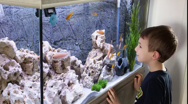 Tips Lengkap Membuat Aquarium yang menarik dan Unik