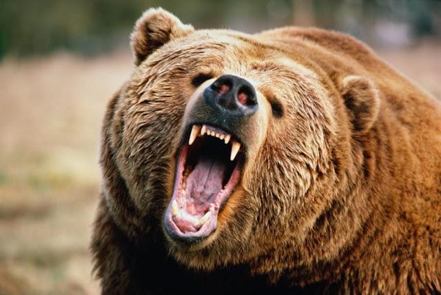 Mientras esquiaba, la perseguía un oso y no se dio cuenta