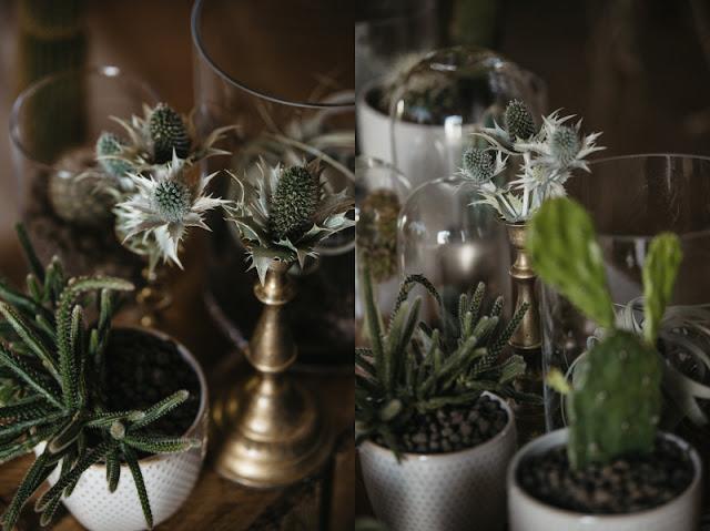 Kaktusy na ślubie i weselu.
