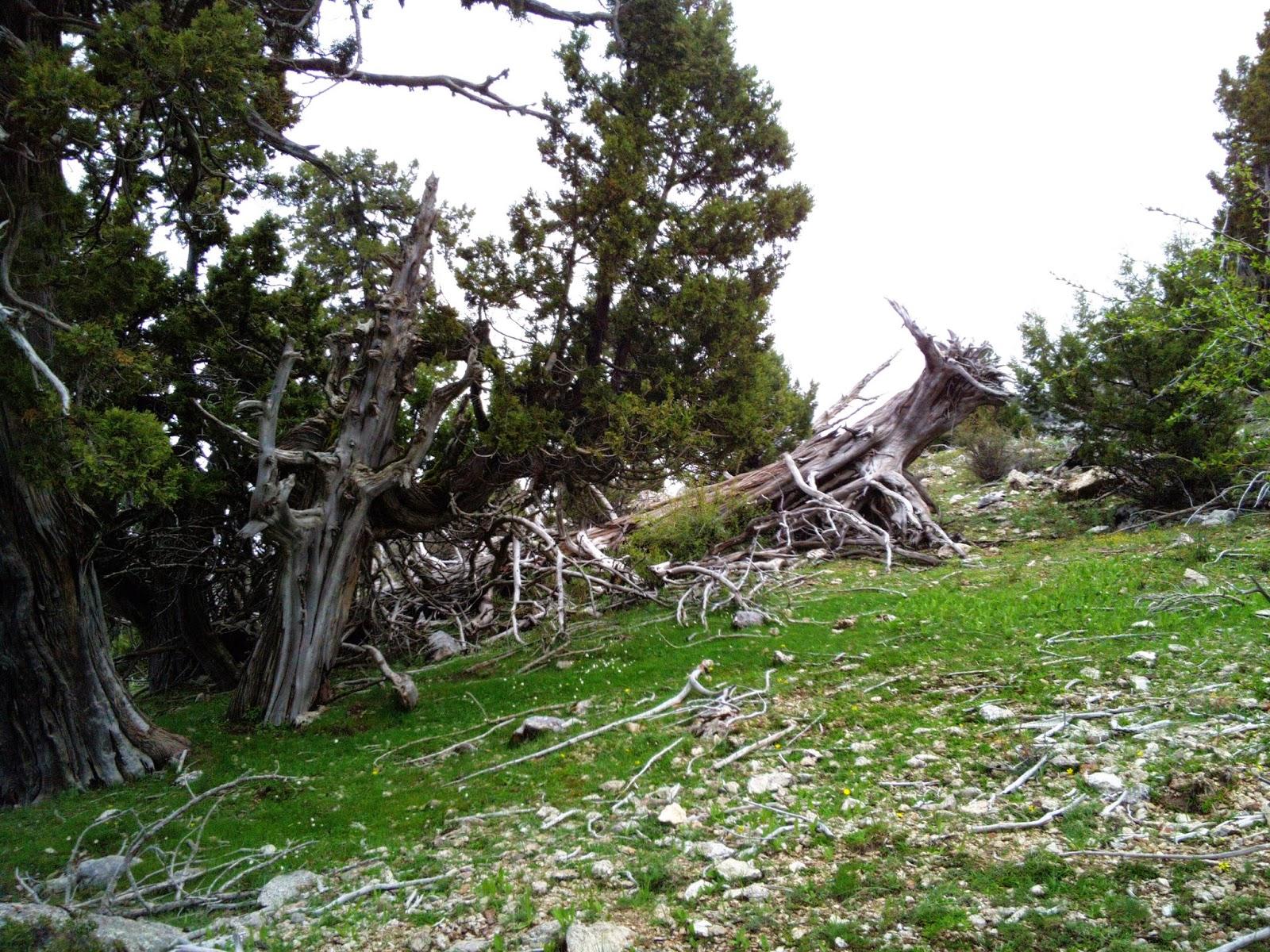 26e9b44b104 Esimene punkt asus kohe 600 m tõusuga mäe otsas, kuhu jõudmiseks oli kaardi  järgi jälle kõige kutsuvam kasutada musta rada. Paljud tiimid kulutasid  selle ...