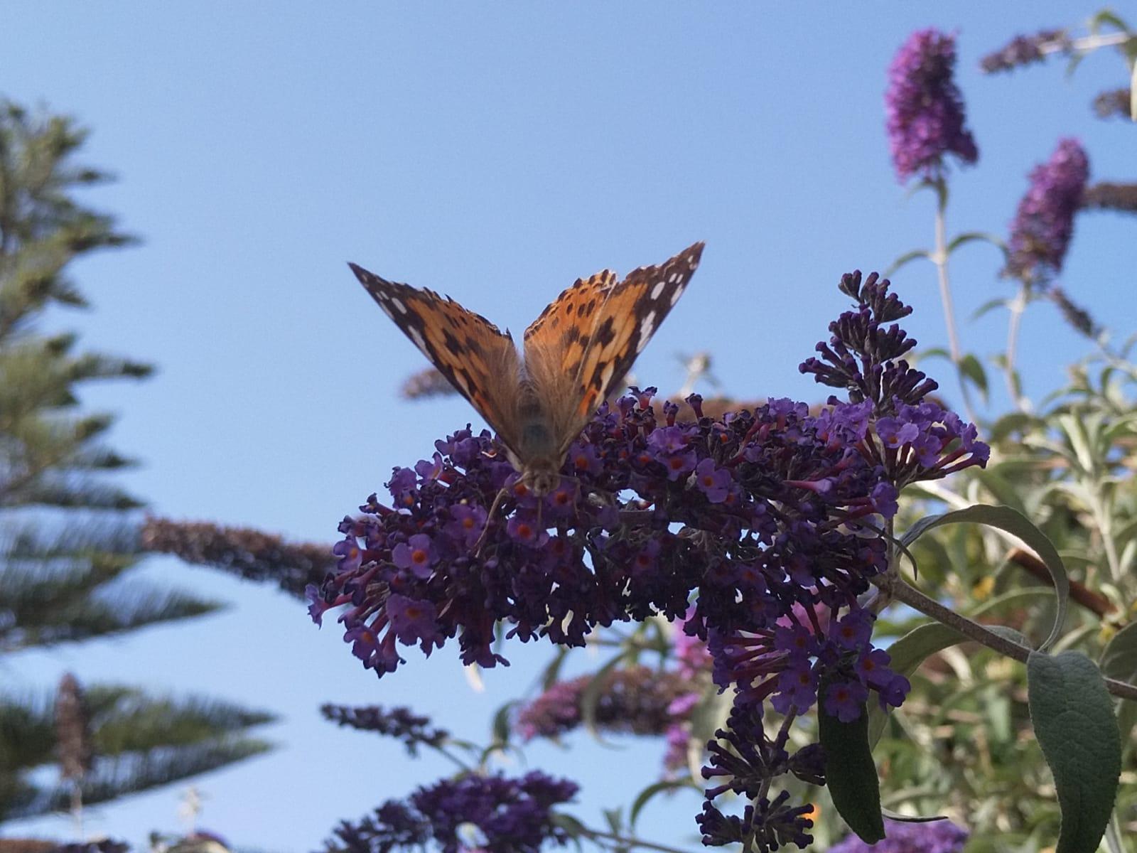 De Fleurs Et D Insectes De Flores E Insectos Espaces Instants